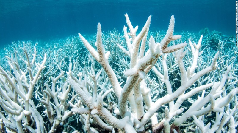 Photograph of Coral Reef, used as reference and as inspiration for the icons in Awesome People artwork