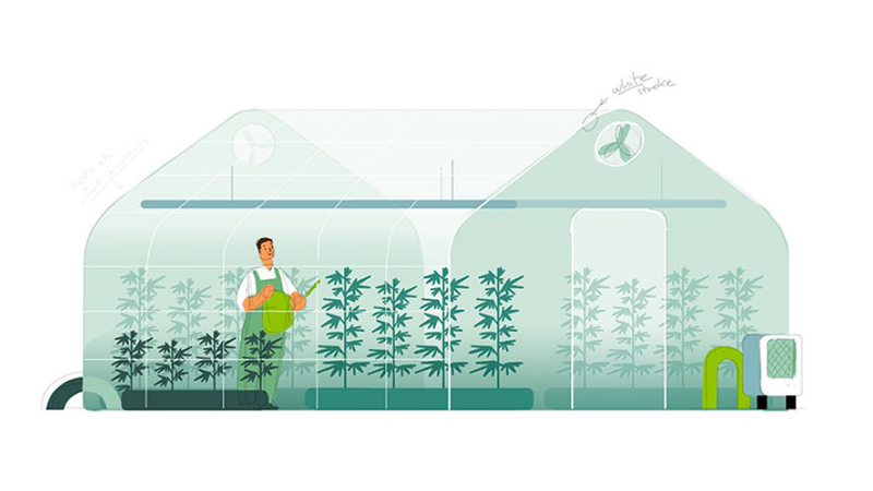 A colour sketch of a greenhouse and a gardener watering tall stems