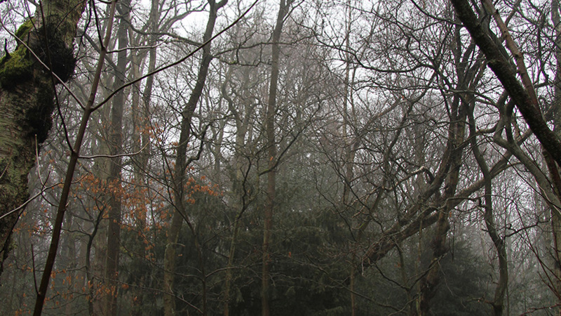 Photograph of Woods used in Sugary Death Machine